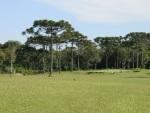 Large fairway on the Gramado golf course